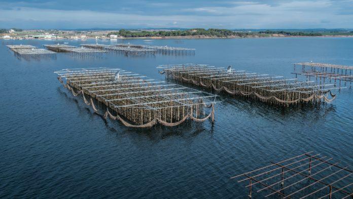 Sète : sauver un territoire et 3 000 petites entreprises