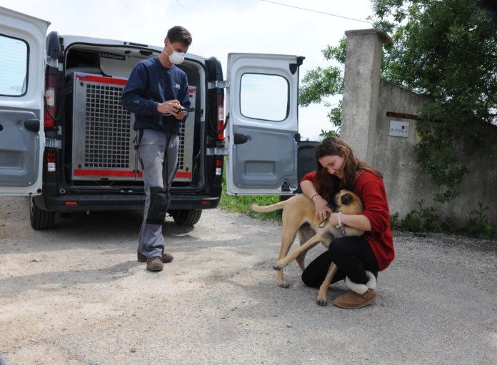 Adoption instantanée pour Pitt, jeune chien de la SPA