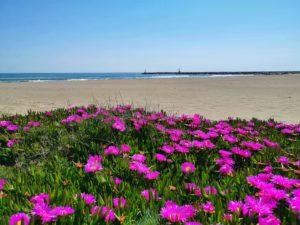 En Languedoc et en Roussillon, les communes jouent la carte des grands espaces de sable fin, comme ici à Leucate   dans l' Aude.